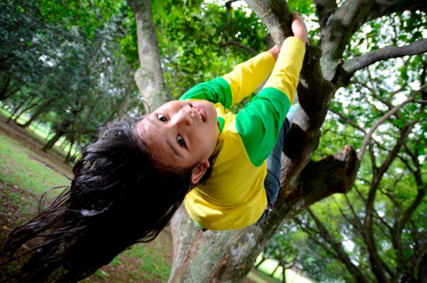 Caca di pohon